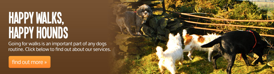 Find out more about our dog walking services
