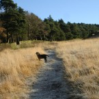 Lucy in Lyme Park