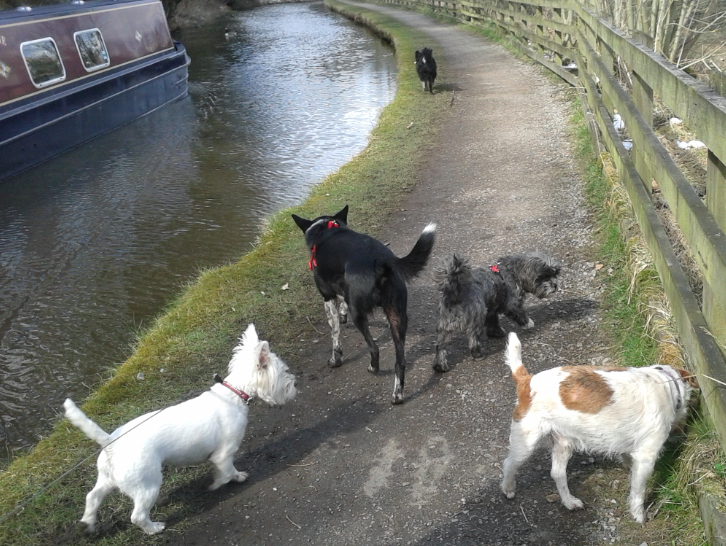 happy hounds on canal in new mills