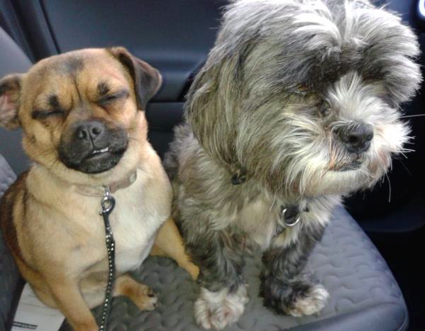 Scrappy and Penny