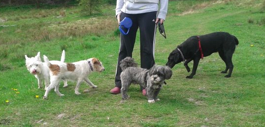 lucy, daisy lupo and scrappy