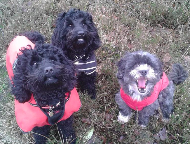 scrappy (my dog) and the cockapoo sisters Bobbie and bridie
