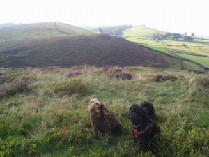 some of my WB clients on Taxal Edge