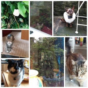 some of this weekends cats